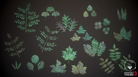 Leaf/Foliage Generator - Substance Designer