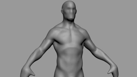 Free Base Male Anatomy