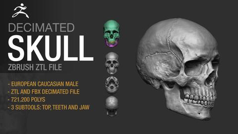 Human Skull - Decimated Zbrush File