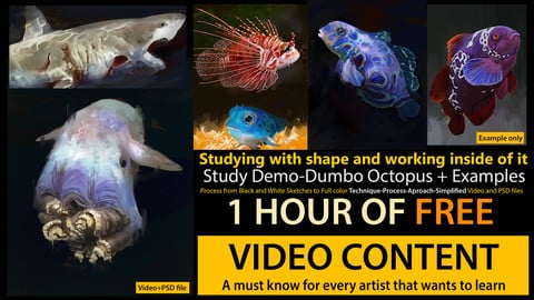 How to Study with Shape-FREE Tips Series-