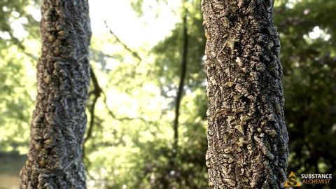 Tree Trunk - PBR Material