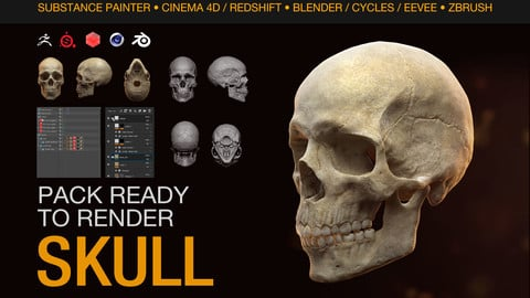 Human Skull - Ready to Render - Cinema 4D + Redshift + Blender + Substance Painter + Zbrush