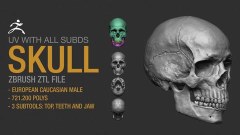 Skull - Zbrush File