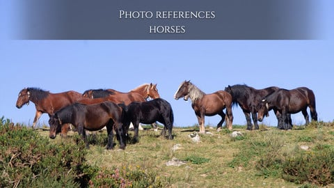 Photo reference Horses