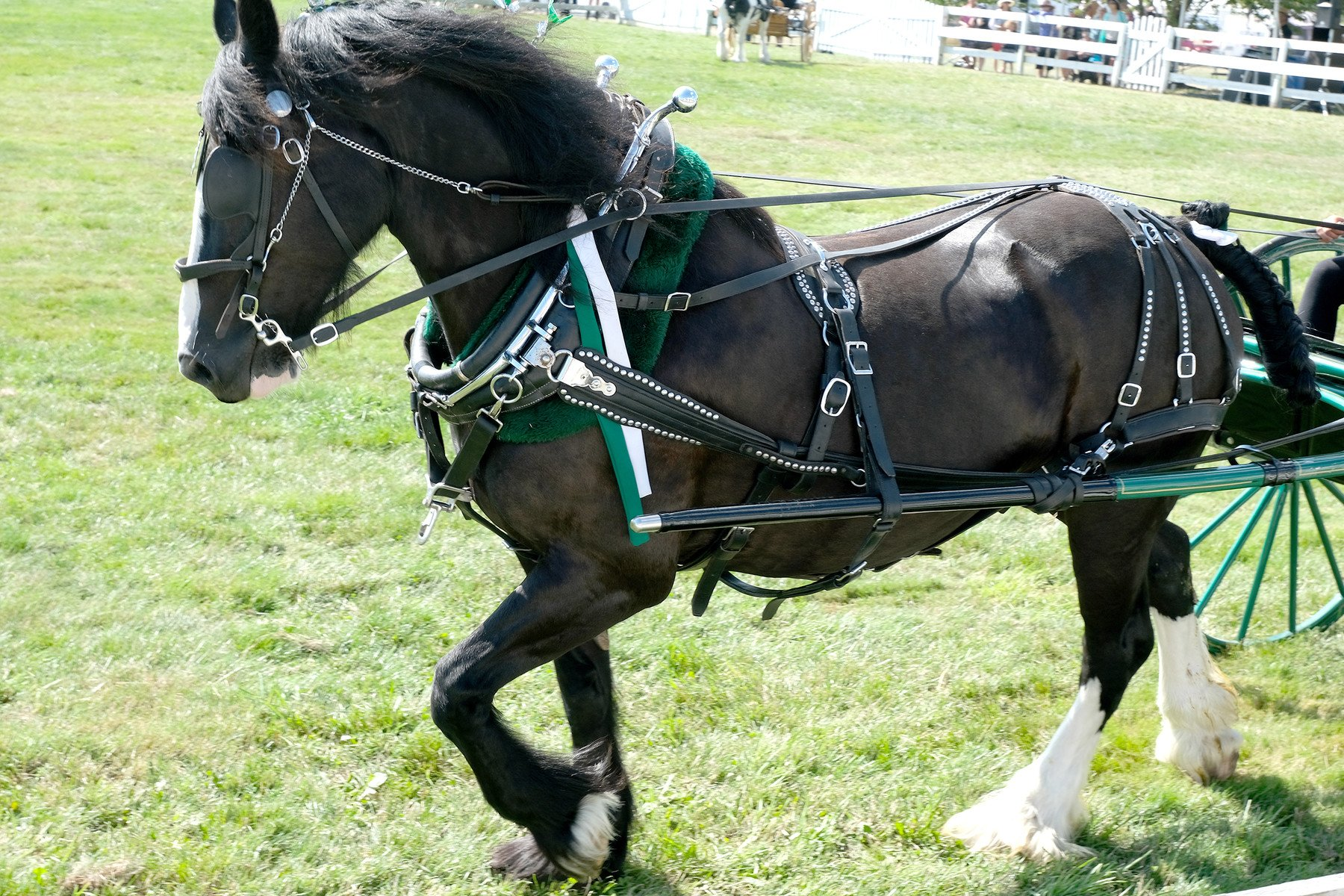 Artstation Clydesdale Horses With Cart Full Harness 110 Photos Horse Reference Photos Resources