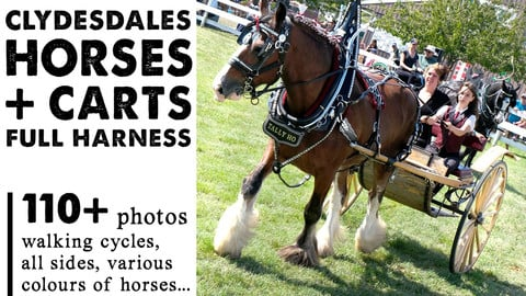 Clydesdale Horses with Cart + Full Harness | 110+ Photos | Horse Reference Photos