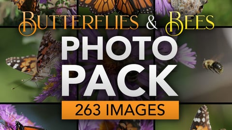 Butterflies and Bees Photo Pack by Jeff Miracola