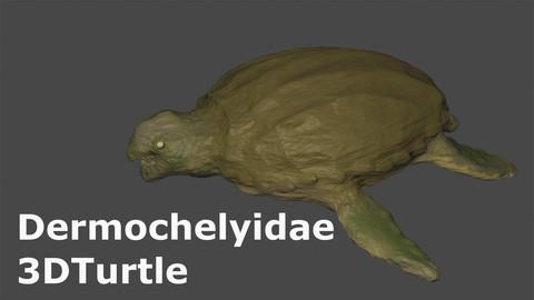 Dermocheryidae 3D turtle