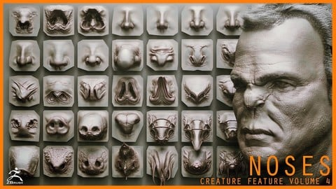 NOSES - 40 ZBrush VDM Nasal Areas