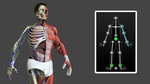 Motion Capture Male Anatomy