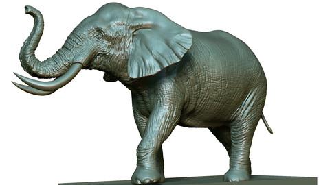 Elephant 3D Printing
