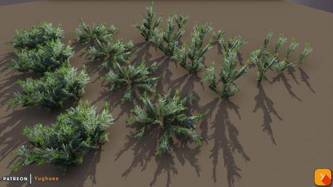 Yughues Pine Bushes