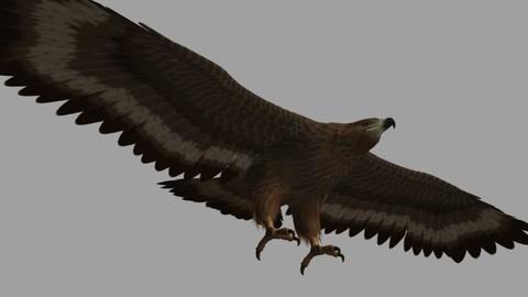 Eagle Rig