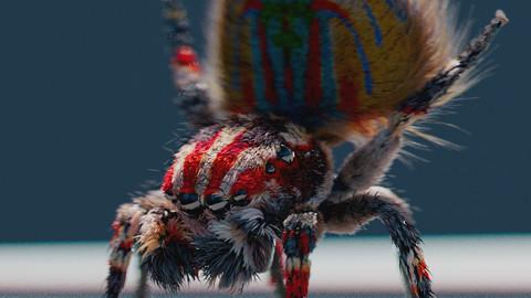 Peacock Spider Fur Grooming Tutorial