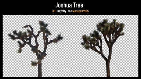 30+ Masked PNGS - Joshua Tree