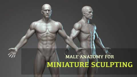 Male anatomy for miniature sculpting