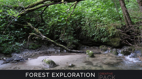 Forest Exploration CREATIVE PACK