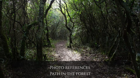 Photo reference Landscapes: Path in the forest