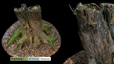 Treestump1 Photo Scan