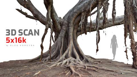 Ficus Tree #3 RAW 3D Scan 5x16k Textures
