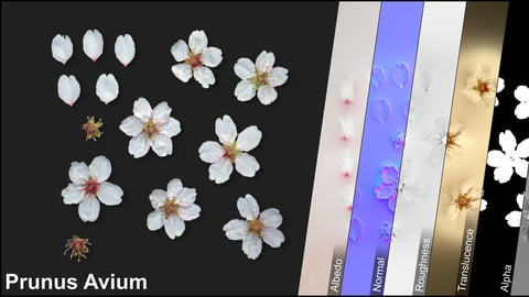 Photometric Scan Vegetation - Prunus Avium - Flowers 1