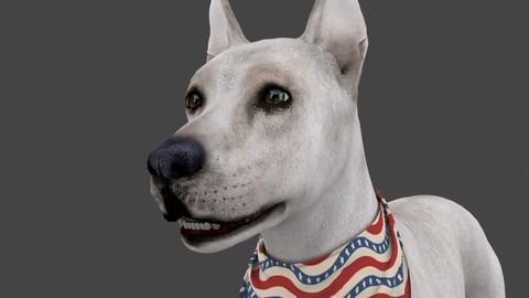 FDOG.001 Dog Idle