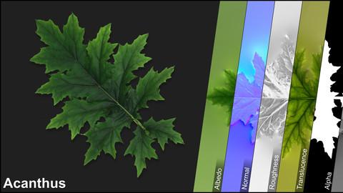 Photometric Scan Vegetation - Acanthus - Leaf 2