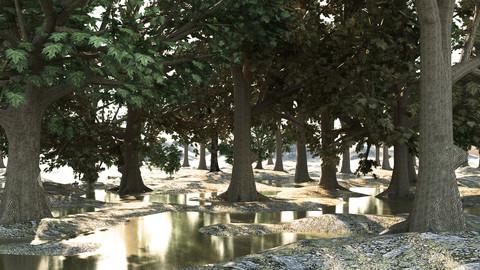 Set maple trees (10 types)