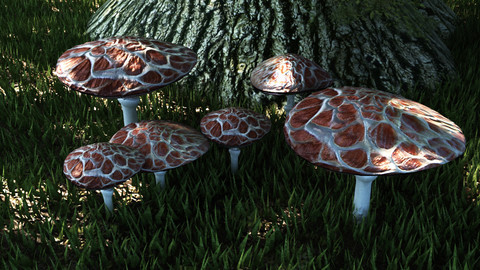 Set mushrooms (5 types)