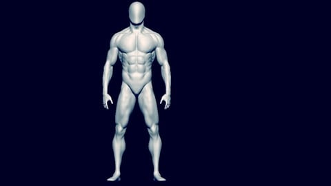 base mesh anatomy