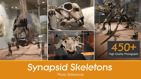 Synapsid Skeleton Reference