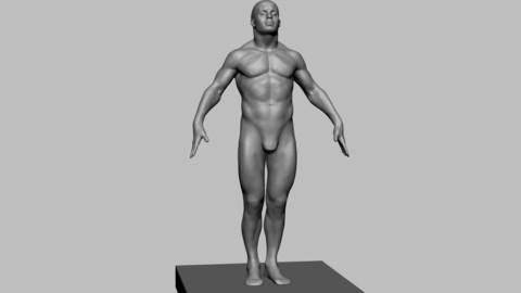 Free Human Anatomy Model