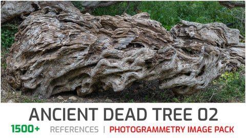 Ancient Dead Tree #2 Photogrammetry image pack