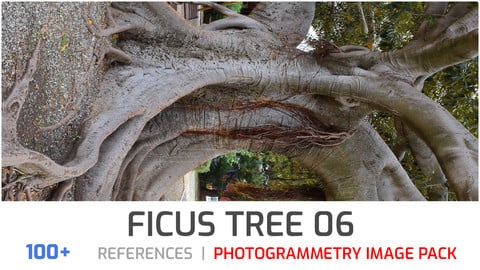 Ficus Tree #6 Photogrammetry image pack