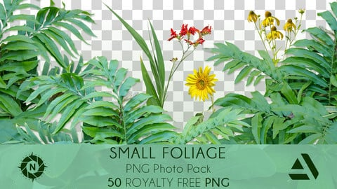PNG Photo Pack: Small Foliage