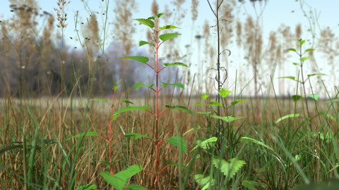 Grass Leaf Starwort Meadow Patch