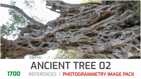 Ancient olive Tree #2 Photogrammetry image pack