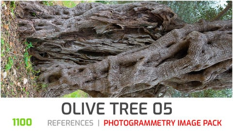 Olive Tree #5  Photogrammetry image pack