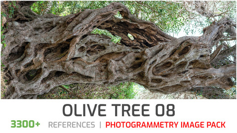 Olive Tree #8  Photogrammetry image pack