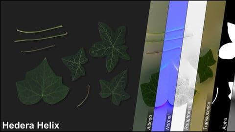 Photometric Scan Vegetation - Hedera Helix - Leaves Kit 2