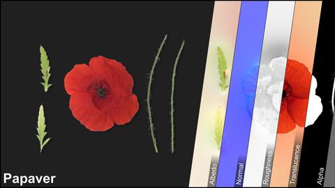 Photometric Scan Vegetation - Papaver - Flower Kit 1 & 2