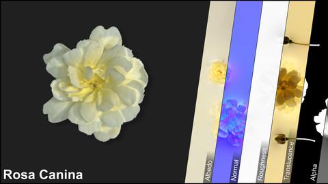 Photometric Scan Vegetation - Rosa Canina - Flower Yellow Kit 1