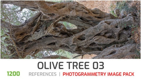 Olive Tree #3  Photogrammetry image pack