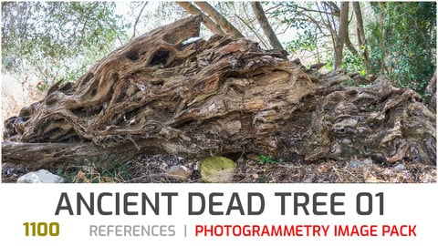 Ancient Dead Tree #1 Photogrammetry image pack
