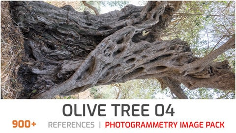 Olive Tree #4 Photogrammetry image pack