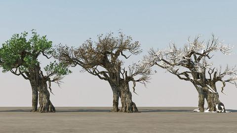 Ancient tree (four seasons)