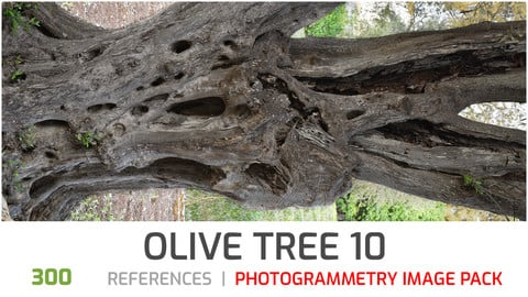 Olive Tree #10 Photogrammetry image pack