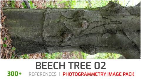 Beech Tree #2 Photogrammetry image pack