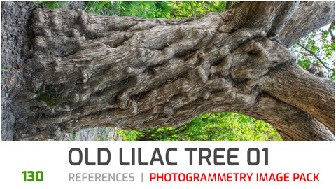 Lilac Tree Trunk #1 Photogrammetry image pack