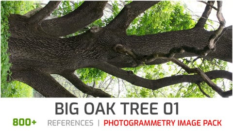 Big Oak Tree #1 Photogrammetry image pack